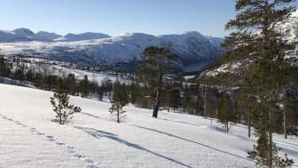 Utsikt ned mot Hellemobotn, Tysfjord