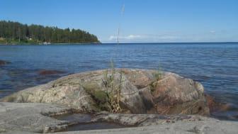 Forskare vid Högskolan i Skövde ska nu genomföra en förstudie för att inventera främmande invasiva arter av kräftdjur i Vänern.