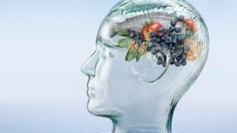 Brain food – putting science on the menu