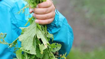 Tømmerås skolehage grønnsaker