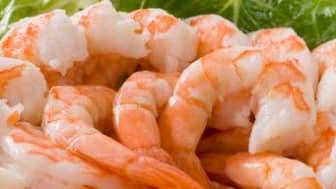 Ecuador shrimp export value up 25% in H1