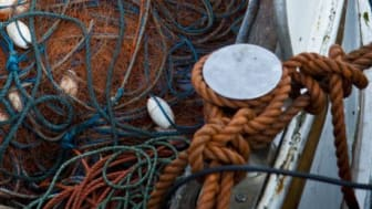 Ökade kvantiteter för kustfiske av sill i Östersjön för 2013