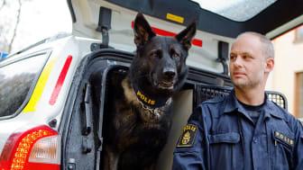 Årets polishund 2017 Rapport's Attack tillsammans med sin förare Tommy Eriksson