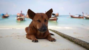 Das bloße Entfernen der Hunde vom Strand von Ao Nang begegnet nur den Symptomen des Problems.