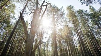 HSB Södermanland ska få fler att energieffektivisera