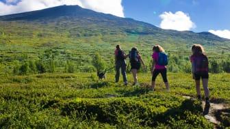 Allt fler vill vandra och uppleva naturen i sommar