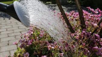 Var vattensmart! Samla regnvatten i tunnor eller damm för att vattna i trädgården.