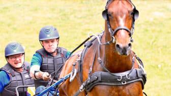 Johan Herner är en av fyra svenska kuskar som kör VM i sportkörning för enbet i Pau i veckan. Foto: Karolina Swärdh
