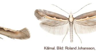 Små fjärilar som lämnar stora spår