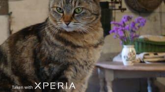 Xperia 1 III_105mmAnimalEyeAF_cat_with_logo