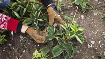 Att trädgården är lättskött rankas i topp när svenskarna får beskriva sin drömträdgård. Mer än en tredjedel värderar det högst.