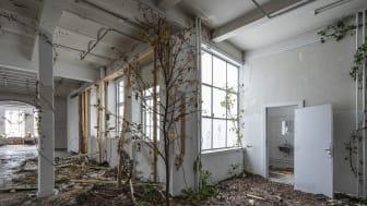 Foto fra udstillingen 'Stien eller tid imellem træer' på Overgaden af kunstneren Rune Bosse, som modtog bevilling ved seneste ansøgningsrunde i maj 2019. Fotograf: Anders Sune Berg.