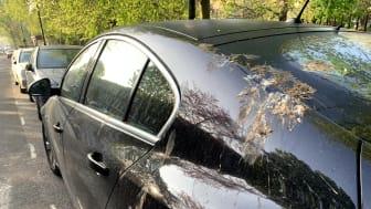 Ford beskytter din bil ved hjælp af kunstige fugleklatter
