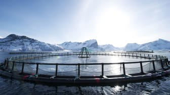 Norwegian aquaculture