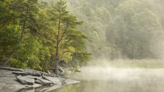 Skog - miljö