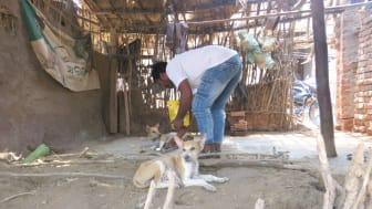 1905-WTG-Odisha-Soforthilfe-Hunde-Fütterung