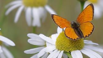 Ekologisk odling gynnar biologisk mångfald