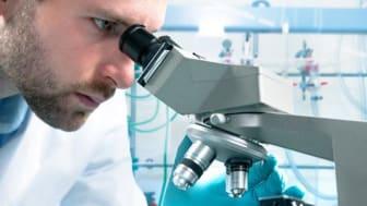   Forskare har hittat ett sätt att ta bort gamla celler och förhindra risken att utveckla typ 2-diabetes