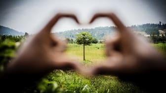 Under 2016 planterades det 4,7 miljoner nya träd genom Vi-skogens verksamhet i östra Afrika.