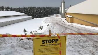 Nu avvecklas den operativa ledningscentralen på den fågelinfluensadrabbade gården i Mönsterås kommun och saneringsplanering tar vid. Foto Eric Arenius