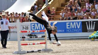 Minion mot miniatyrhäst var en riktig publikfavorit i fjol! Foto: Falsterbo Horse Show