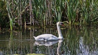 Över 200 fågelarter på Ekeby våtmark