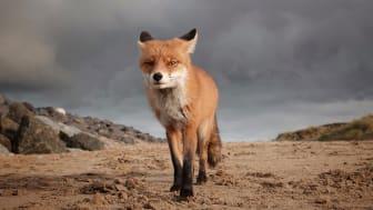 © Marleen Van Eijk, Netherlands, Shortlist, Open competition, Natural World & Wildlife, 2020 Sony World Photography Awards