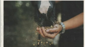 Jyllands-Postens artikel om ejerskifte i Brogaarden Aps.