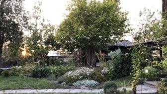 Jennie Strinnhed, ASTER Trädgårdsdesign nominerades med sin lummiga och personliga trädgård.