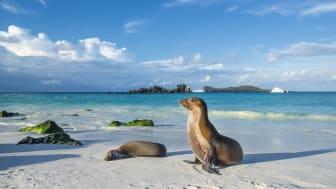 HRX, Galapagos, Espanola Island, Sea lion,©guenterguni-GettyImages-884708080.jpg