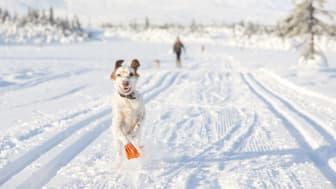Vær aktiv i  påskeferie med hunden din