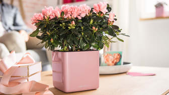 "Zarte Blühpflanzen werden in CUBE Glossy ""Kiss'' zu einem echten Blickfang"