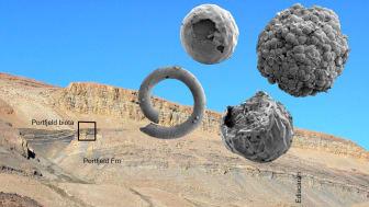 Den mer än en halv miljard år gamla Portfjeld-formationen på norra Grönland med dess innehåll av bland annat embryoliknande mikrofossil. Bild: John Peel