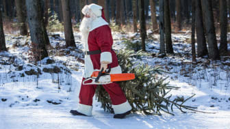 Fæld dit eget juletræ