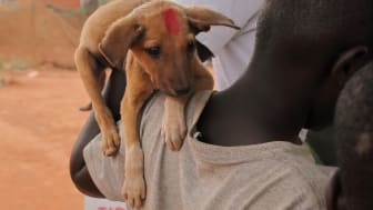 Impfungen von Hunden schützen Tier und Mensch gleichermaßen. (Foto: LSPCA)