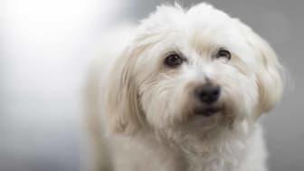 djursjukvård-hund