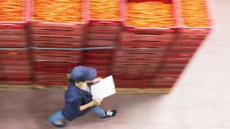 Nytt uppdrag ska stärka livsmedelssektorn