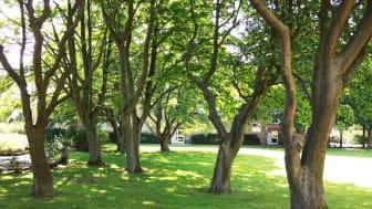 För var 100:e hyresgäst som byter betalsätt innan den 31 maj planterar Helsingborgshem ett träd.