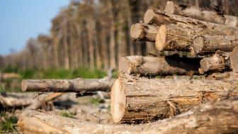 EU har sendt en klar besked til EU Kommissionen om at intensivere EU's indsats for at stoppe skovrydning. Dermed anerkendes skovrydning til at være et globalt ansvar.