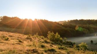 Krüger og medarbejdere har reddet 1000 m2 natur, der nu får lov at være vild for evigt.