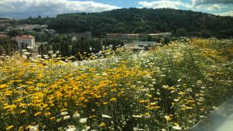 Takterrassen på B7 Eufemia har utsikt ut over blomsterengen mot Middelalderparken.