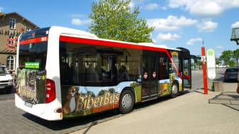 Der BiberBus der Uckermärkischen Verkehrsgesellschaft verbindet täglich auf zwei Routen touristische Highlights rund um Angermünde (Foto: Tourismusverein Angermünde)