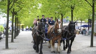 Nu tar hästarna över Kungsträdgården
