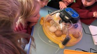 Barna i Universet studentbarnehage i Tromsø følger spent med på klekkeprosessen inne i rugemaskinen.