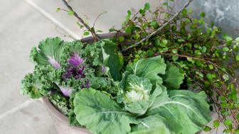 Trädgårdspyssel – sensommarinspiration