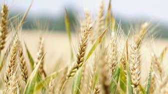 Skalbar hybridplattform lägger grund för digitaliserad brödproduktion - Pulsen Integration blir integrationspartner till Pågen