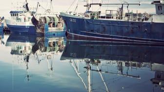HaV stänger fiske i Skagerrak för att skydda ungfisk