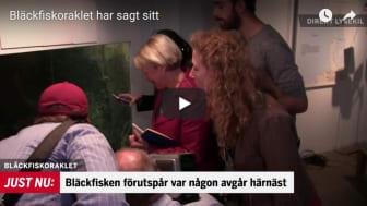 En bläckfisk på Havets Hus i Lysekil har visat sig ha en otrolig egenskap.
