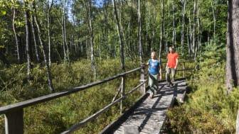 Wandern in Brandenburg ist Natur pur - in einem Nationalpark, drei Biosphärenreservaten und elf Naturparks. Foto: TMB-Fotoarchiv/Wolfgang Ehn.