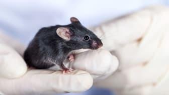 Djurförsöksstatistiken för 2016 har publicerats